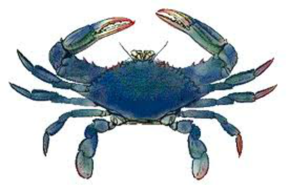 Blue Crab Antiques